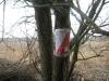 Метка на дереве